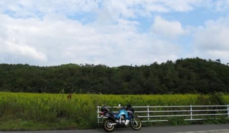 f:id:shiro-kurage:20121007224057j:image