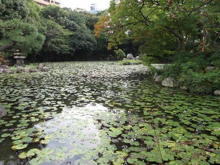 f:id:shiro-kurage:20121027220341j:image