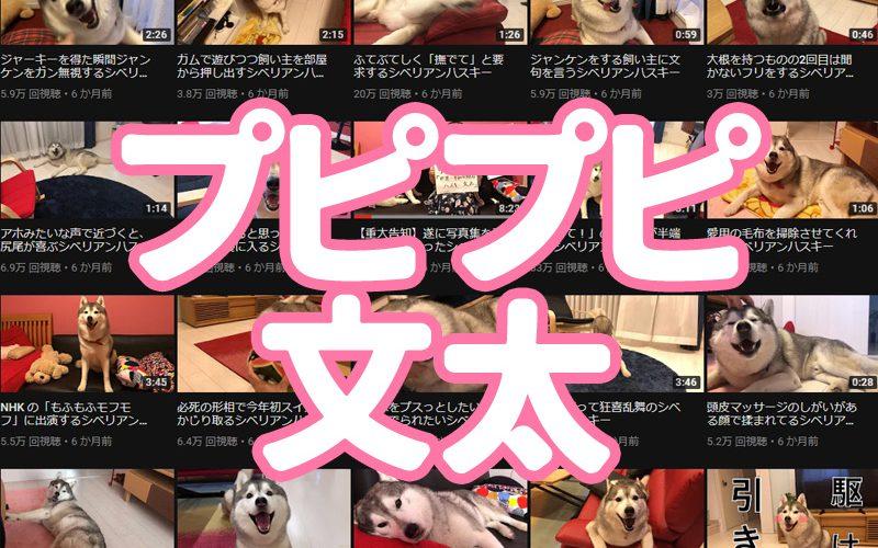f:id:shiro-usagi:20190505133421j:plain