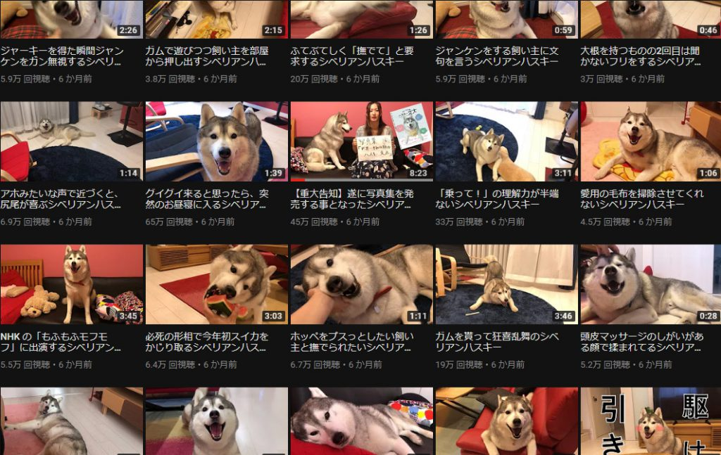 f:id:shiro-usagi:20190505133620j:plain