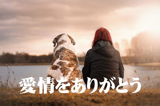 f:id:shiro-usagi:20191130124248j:plain