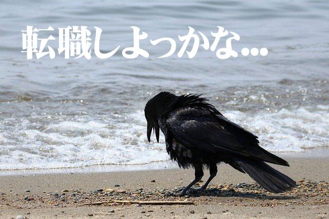 f:id:shiro-usagi:20200123223204j:plain