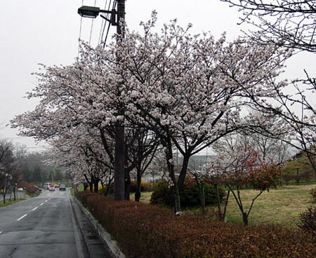 f:id:shiro0922:20100416170447j:image