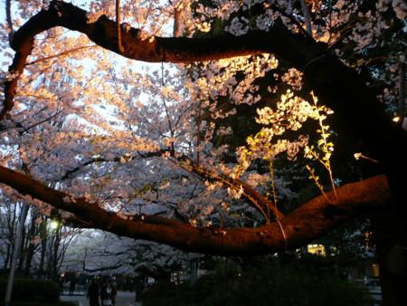f:id:shiro_96:20100406181143j:image