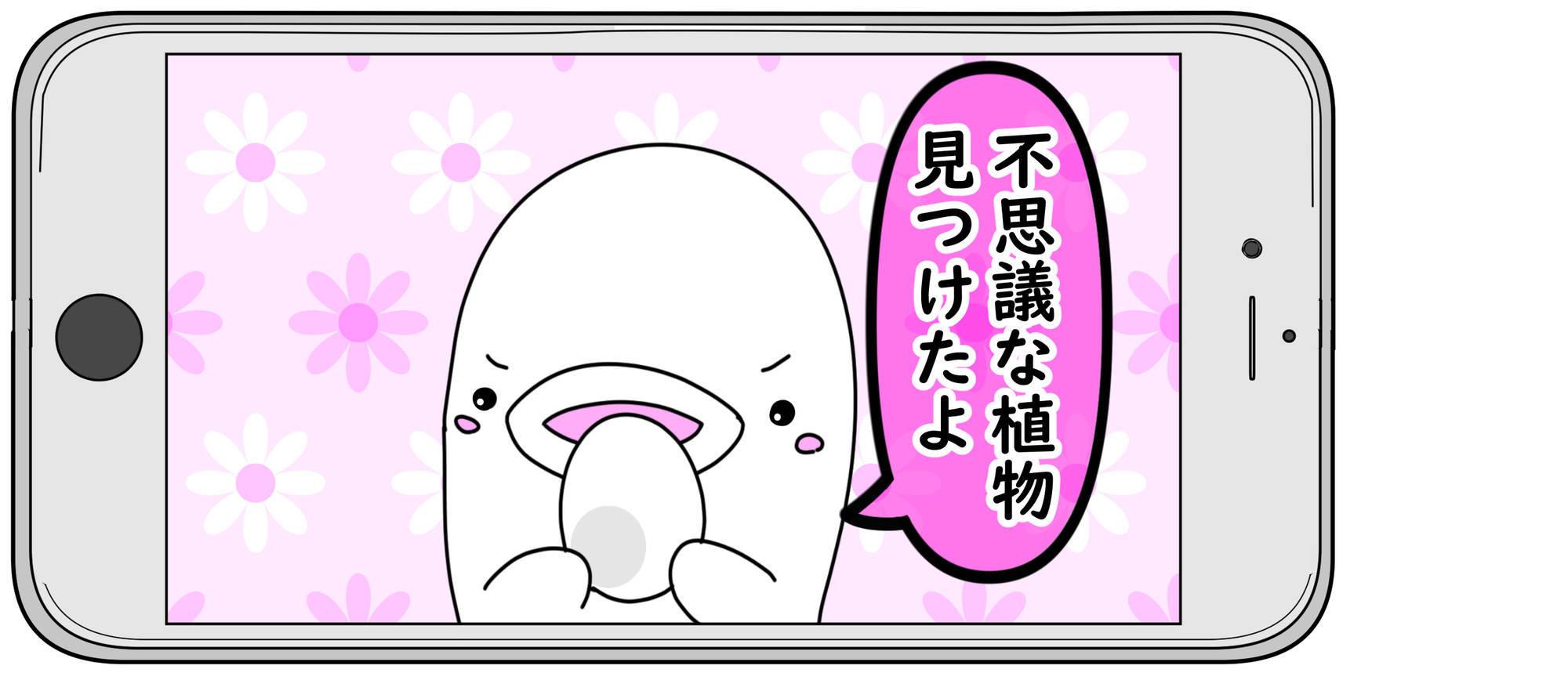 f:id:shiro_iruka:20190520221223j:plain