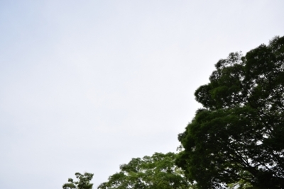 f:id:shirochari:20180526210813j:image