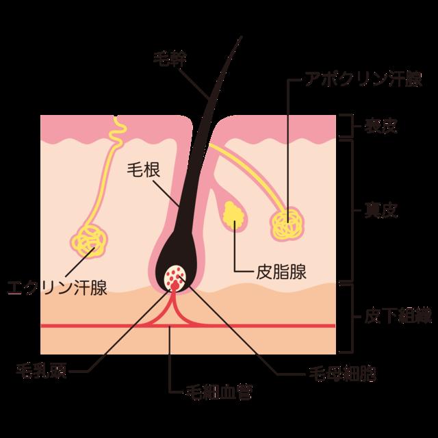 f:id:shirococco:20190812122319p:plain