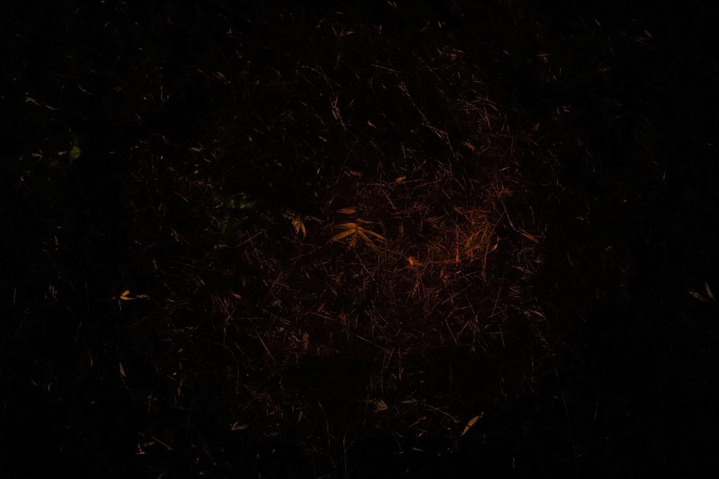 f:id:shirodango:20211008202033j:plain