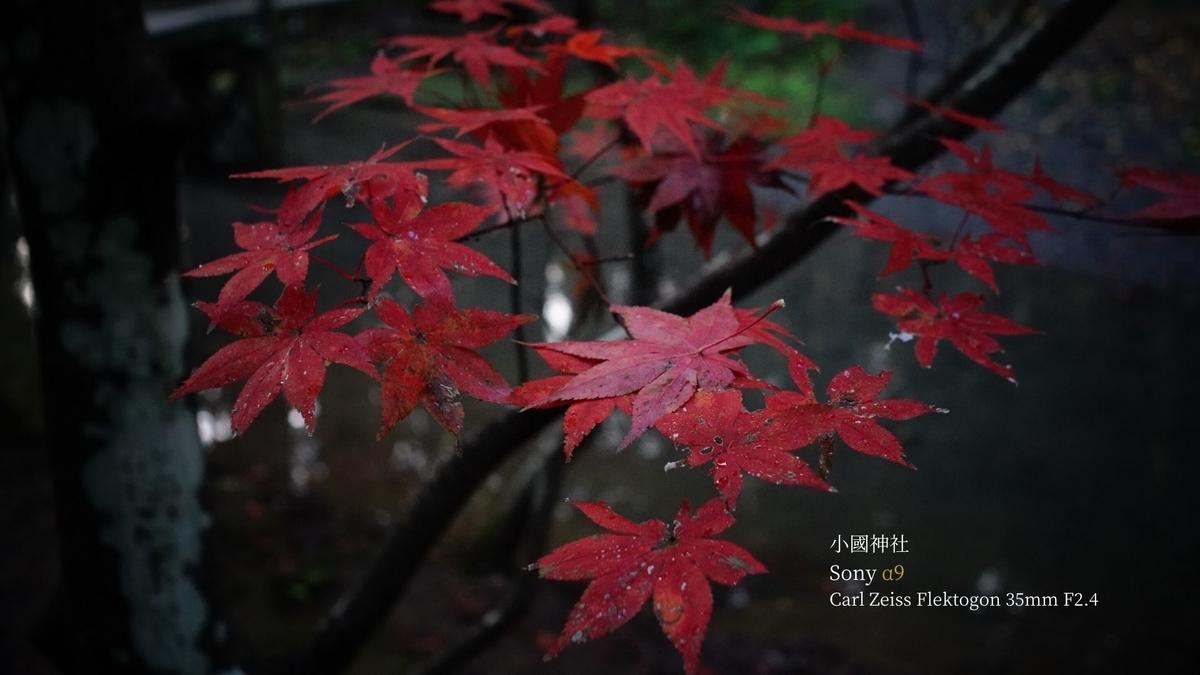 f:id:shirofilm:20191124112952j:plain