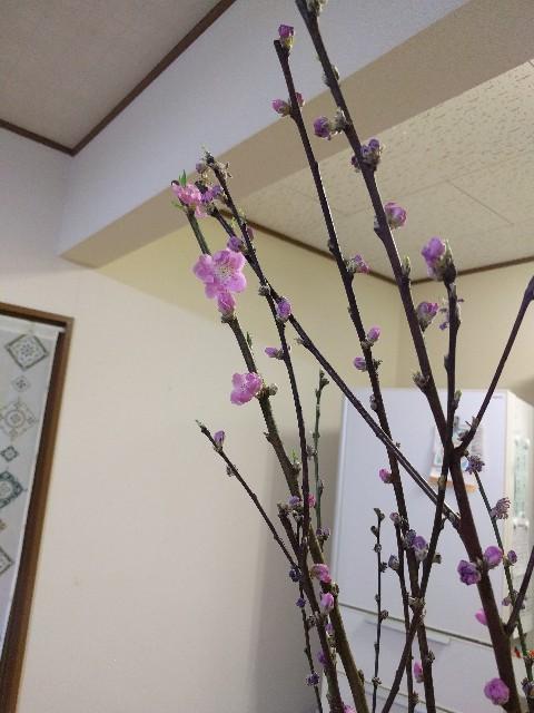 f:id:shiroi-kobuta:20170302175321j:image