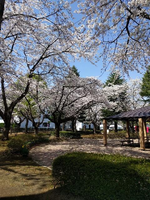 f:id:shiroi-kobuta:20170425100946j:image