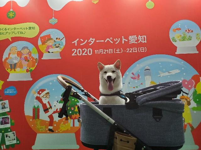 f:id:shiroi_okome:20201201221504j:image