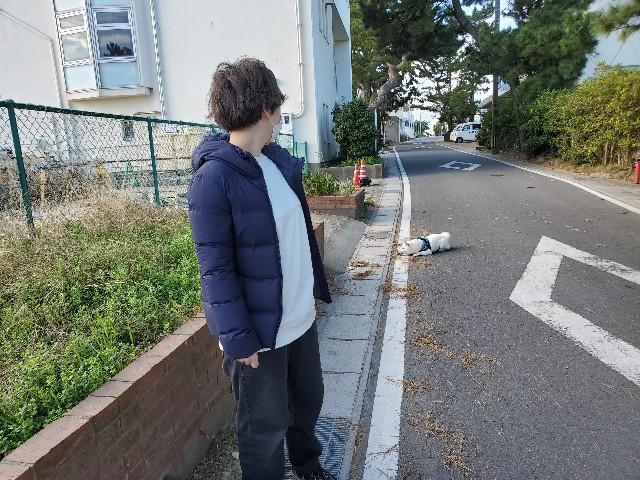 f:id:shiroi_okome:20201218145502j:image