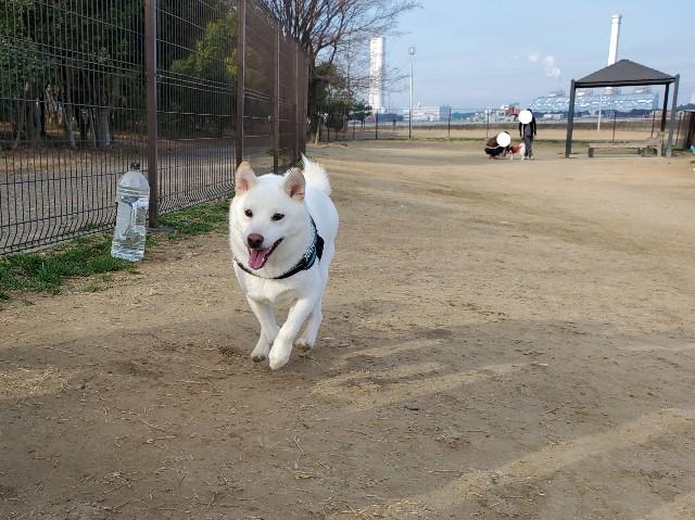f:id:shiroi_okome:20210301183936j:image