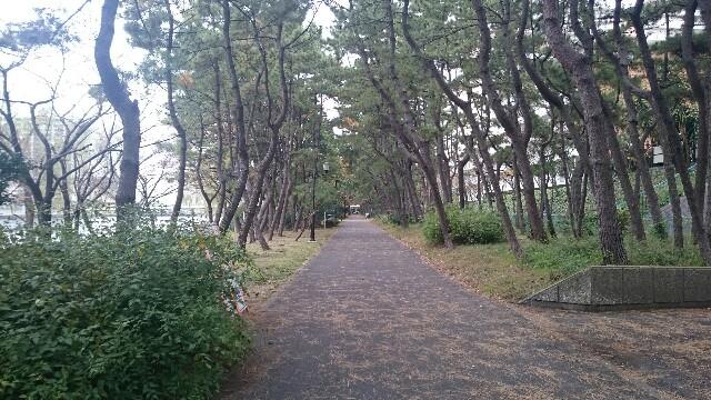 f:id:shirokuma-papa:20161127111753j:image