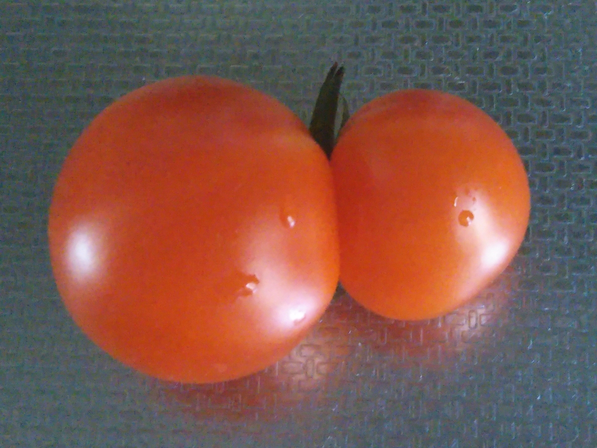 f:id:shirokuma-spice:20210909133404j:plain