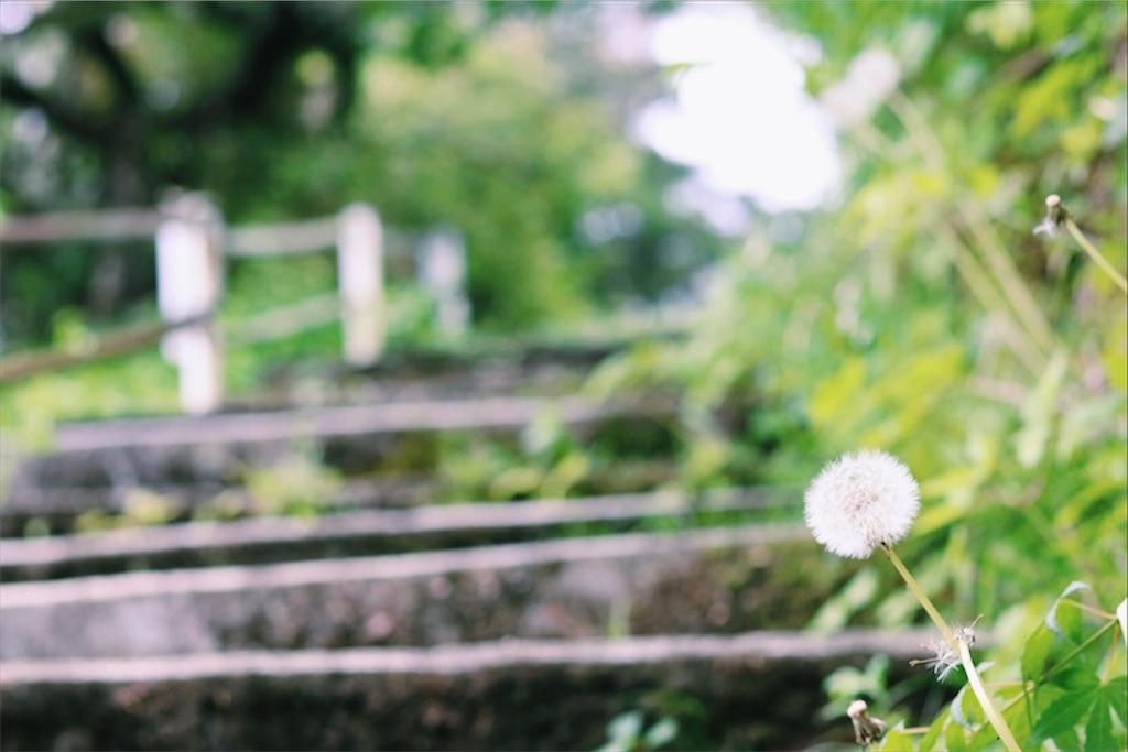 f:id:shirokuma0130:20180616222035j:image