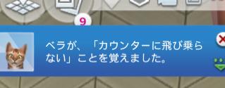 f:id:shirokumagirl:20200109232355p:plain