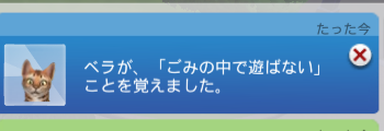 f:id:shirokumagirl:20200111223828p:plain