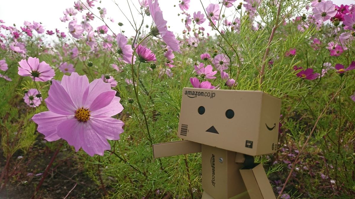 f:id:shirokumapanda:20181127000456j:plain