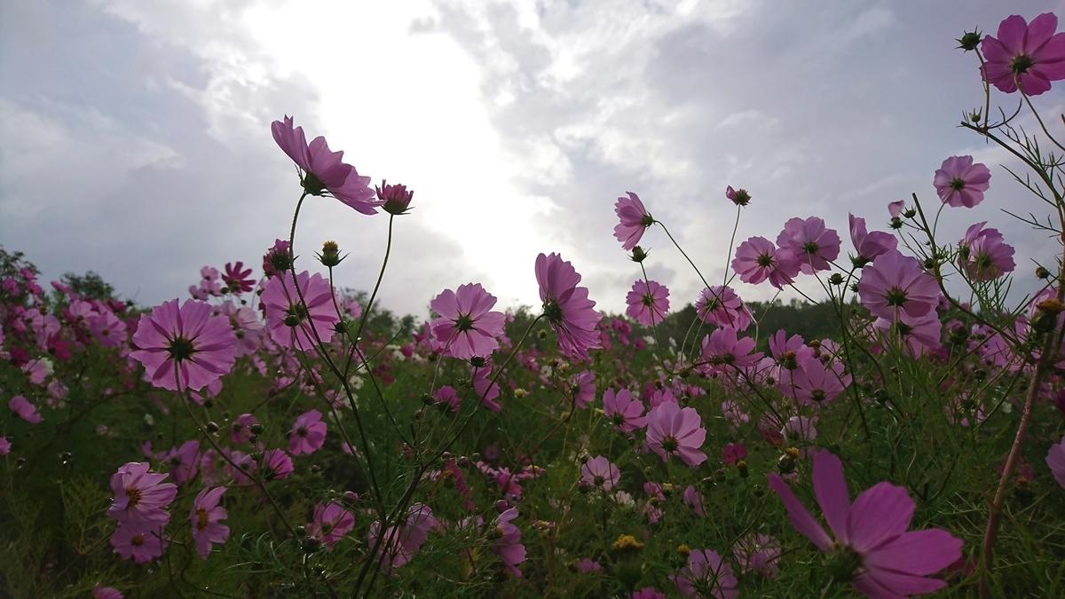 f:id:shirokumapanda:20181127000501j:plain