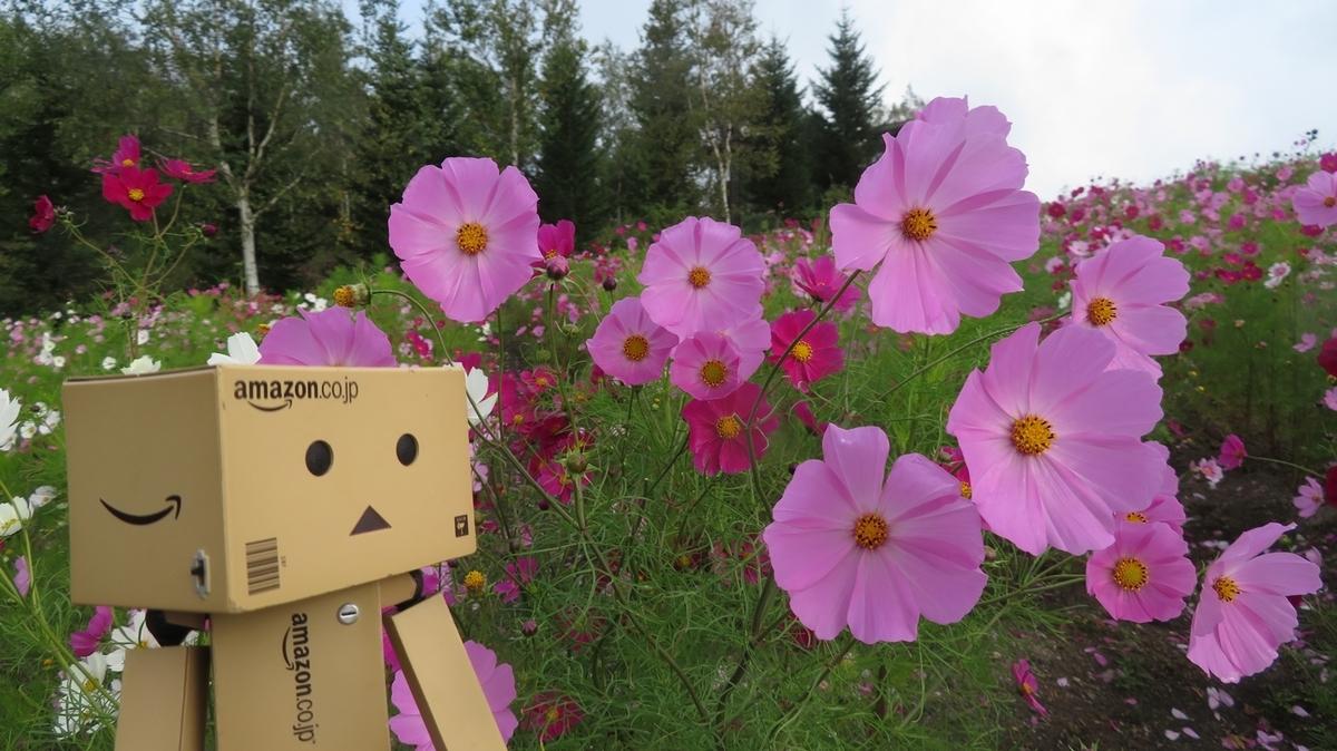 f:id:shirokumapanda:20181127002818j:plain