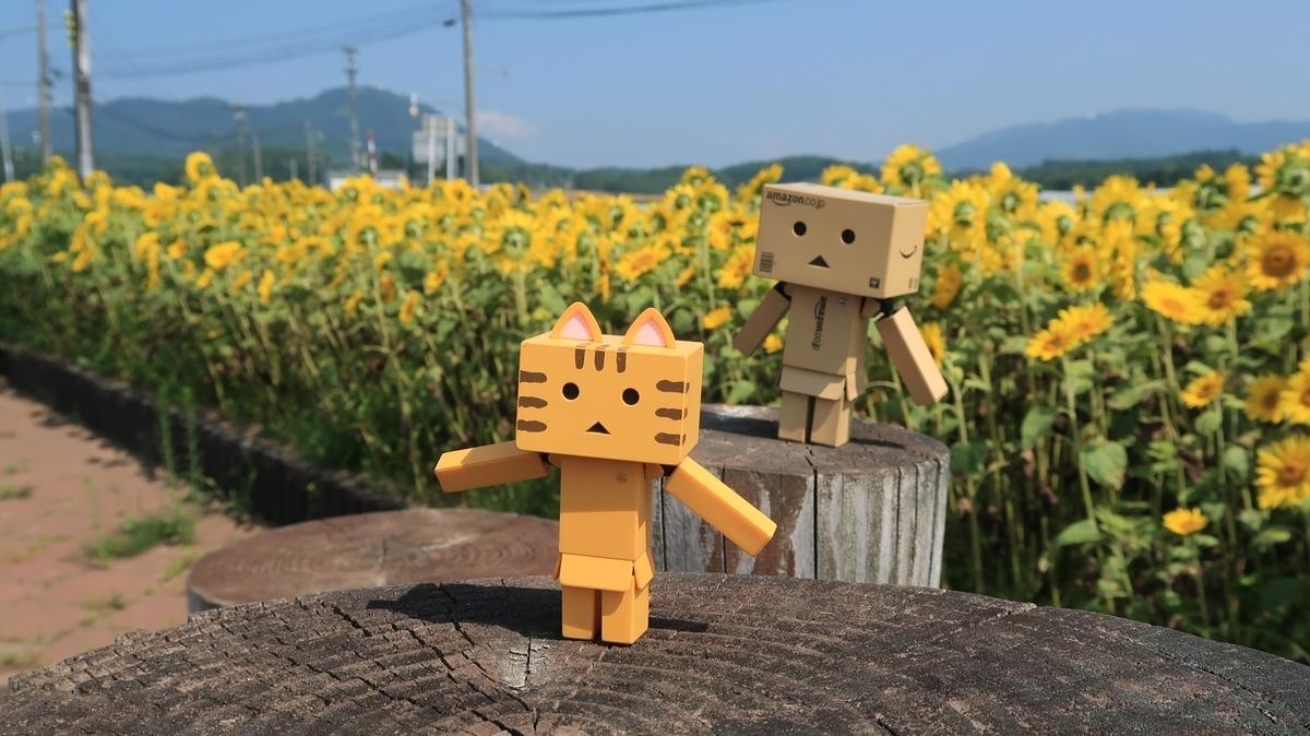 f:id:shirokumapanda:20190904233005j:plain