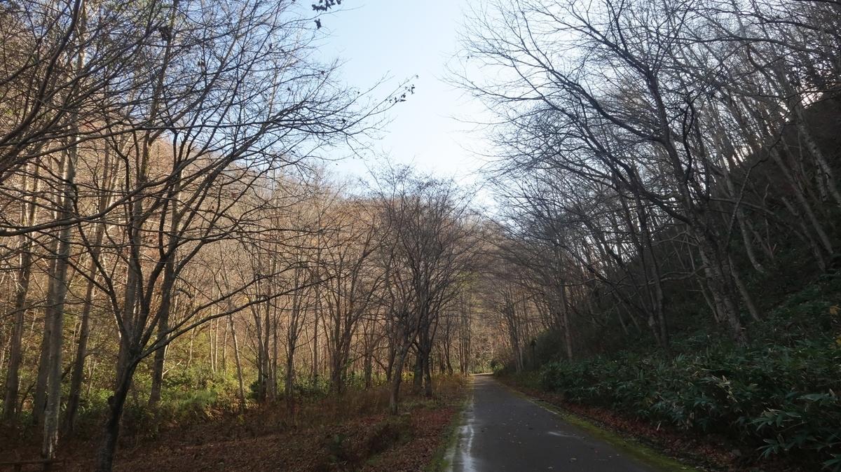 f:id:shirokumapanda:20191102223425j:plain
