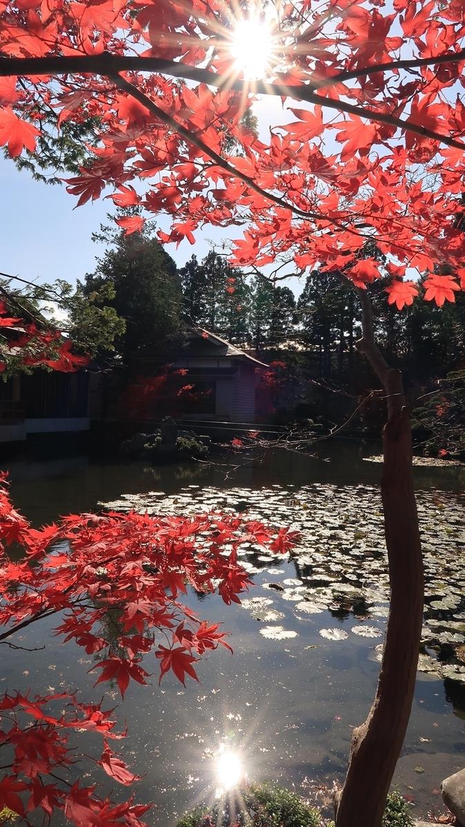 f:id:shirokumapanda:20191103233727j:plain