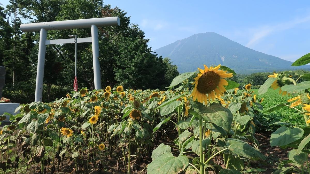 f:id:shirokumapanda:20200112195038j:plain