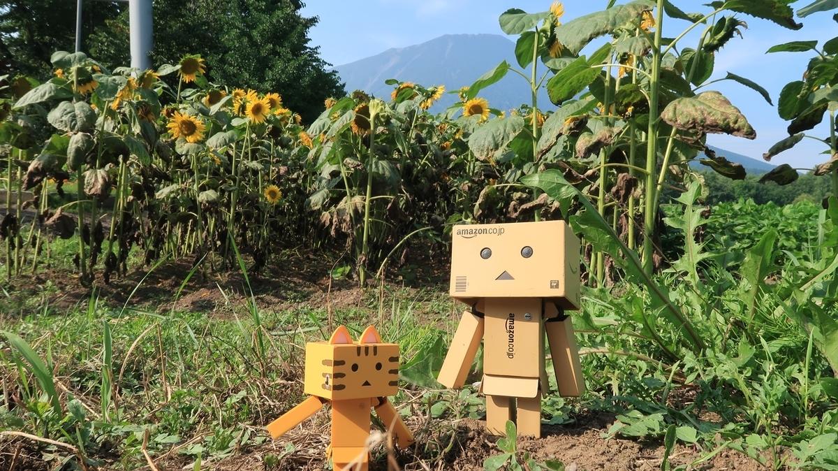 f:id:shirokumapanda:20200112195107j:plain