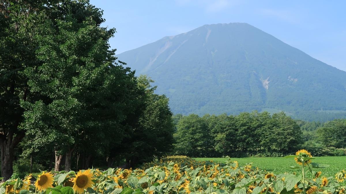 f:id:shirokumapanda:20200112195114j:plain