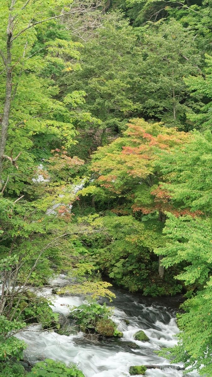 f:id:shirokumapanda:20200426022804j:plain