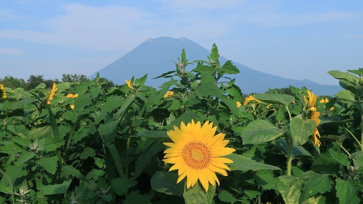 f:id:shirokumapanda:20200724225642j:plain