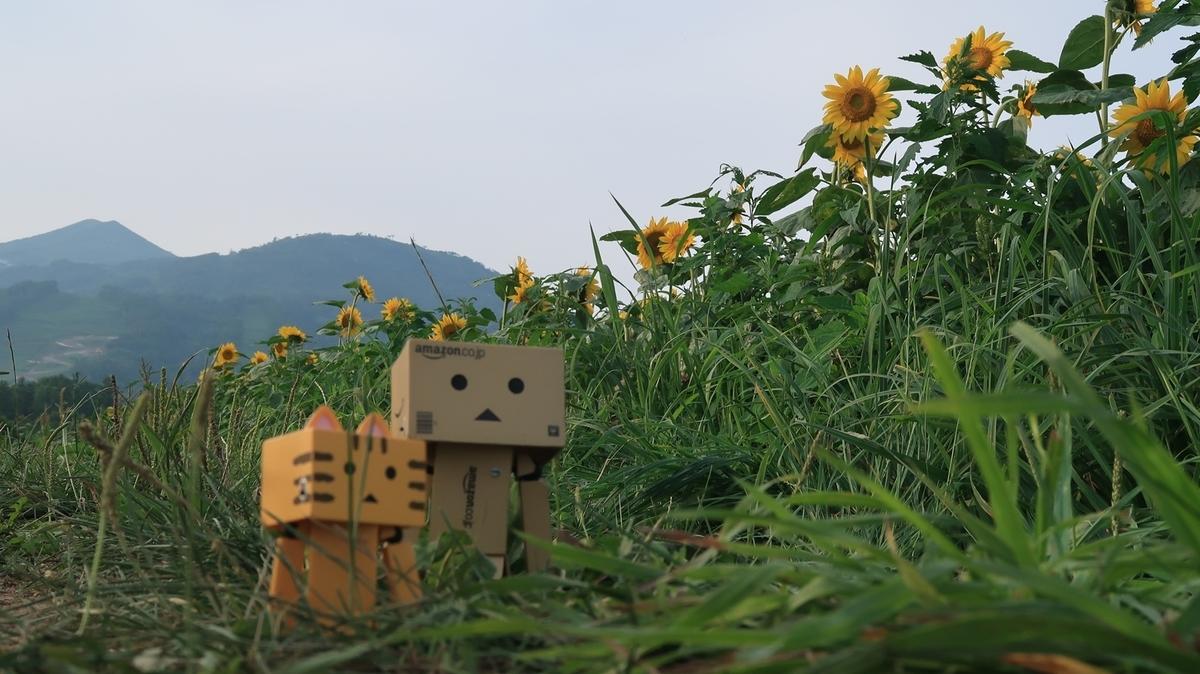 f:id:shirokumapanda:20200724225905j:plain