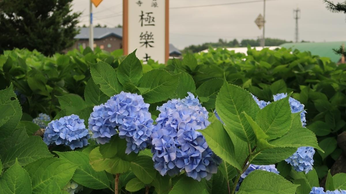 f:id:shirokumapanda:20200804005116j:plain