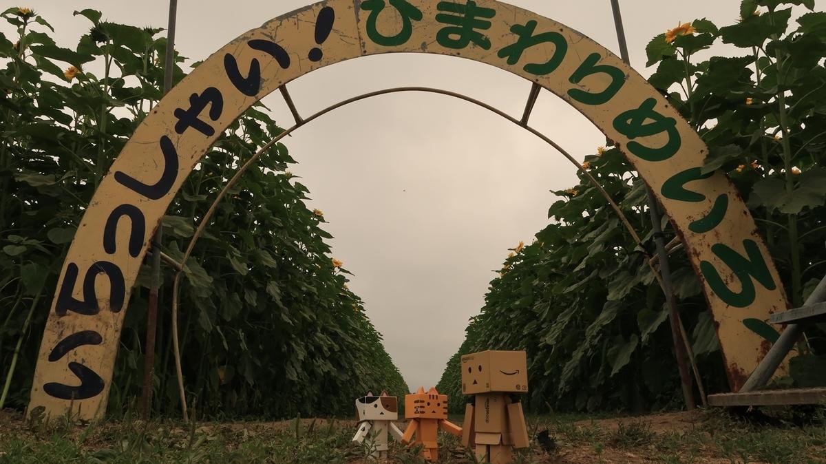 f:id:shirokumapanda:20200804005209j:plain