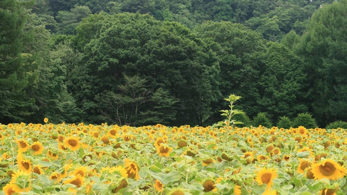 f:id:shirokumapanda:20200810005056j:plain