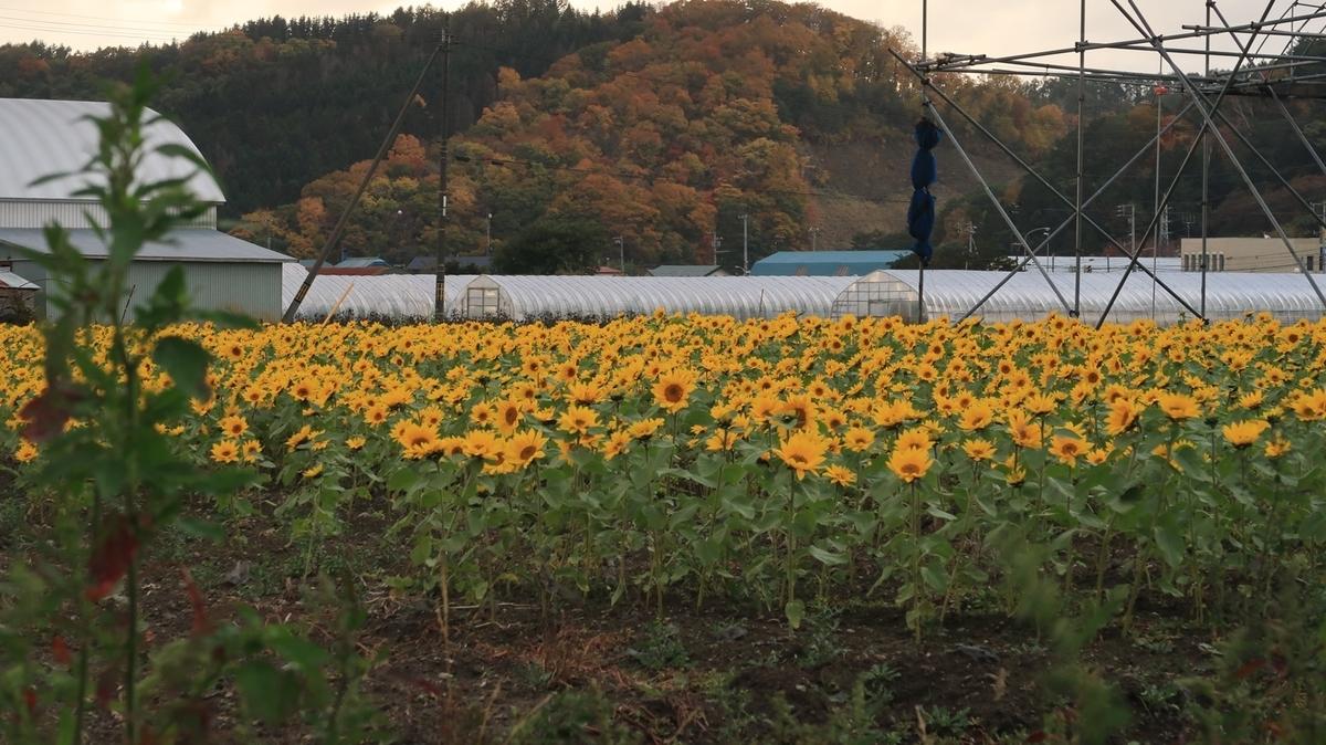 f:id:shirokumapanda:20201024233736j:plain