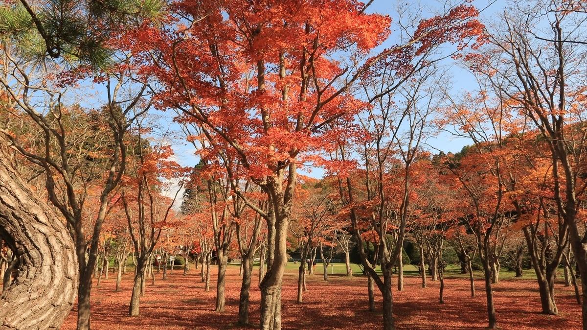 f:id:shirokumapanda:20201031234659j:plain