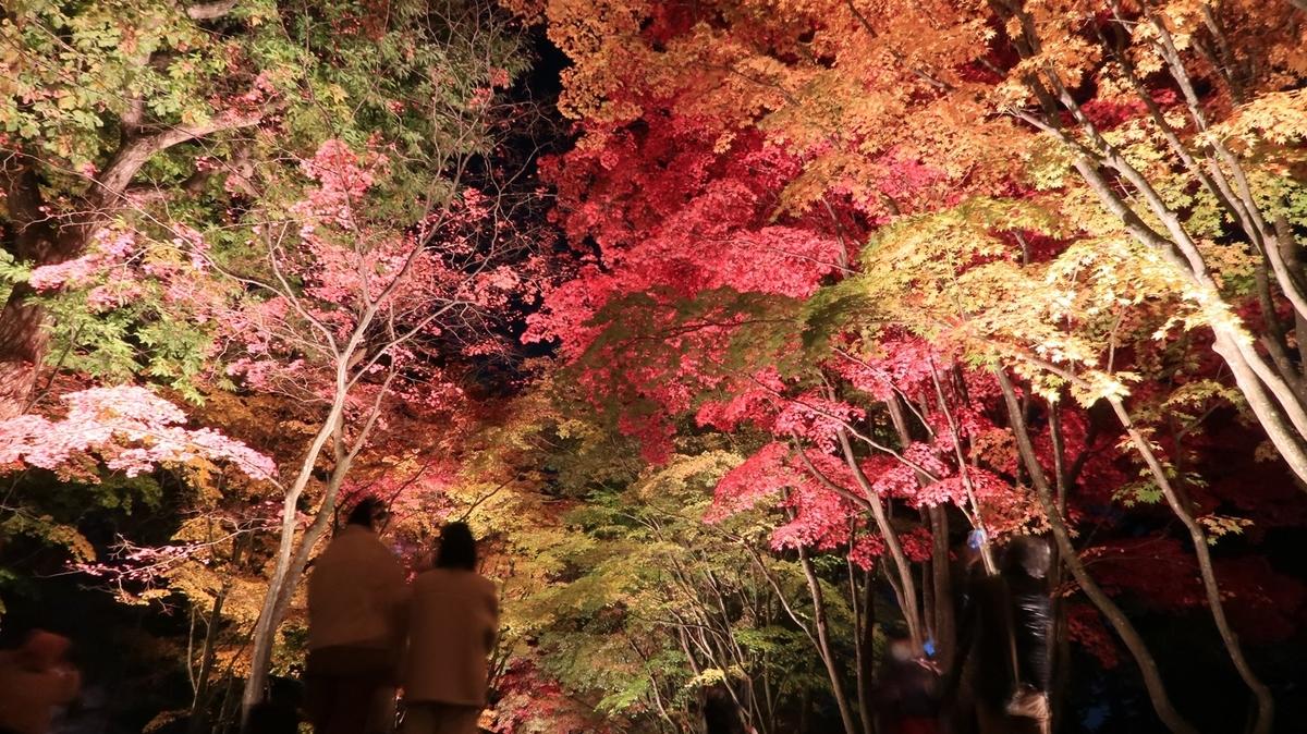 f:id:shirokumapanda:20201031235130j:plain
