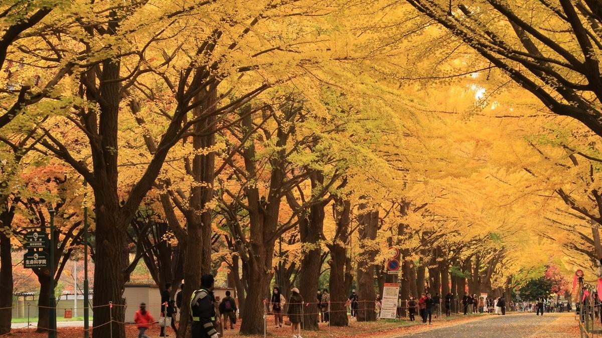 f:id:shirokumapanda:20201102005950j:plain