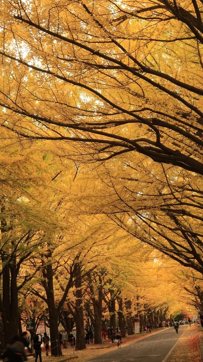 f:id:shirokumapanda:20201102005956j:plain