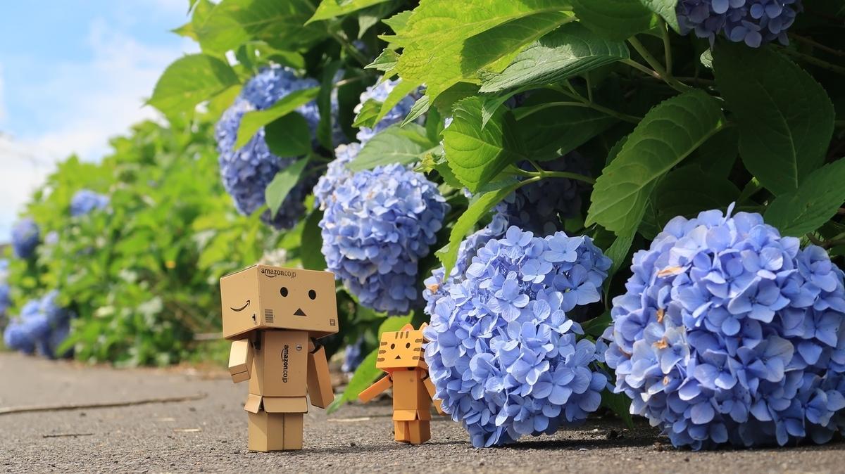 f:id:shirokumapanda:20201114012132j:plain