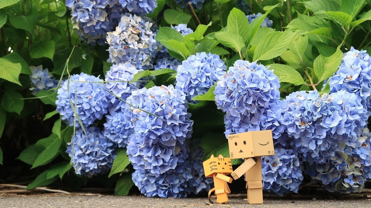 f:id:shirokumapanda:20201114012138j:plain