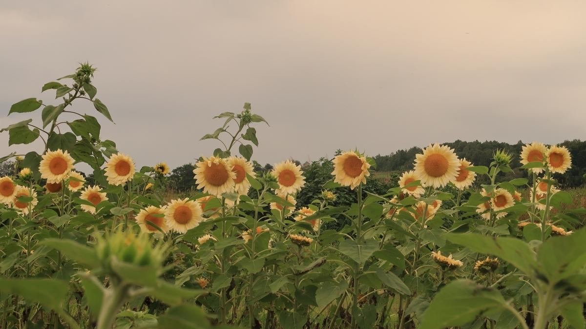 f:id:shirokumapanda:20201223005313j:plain