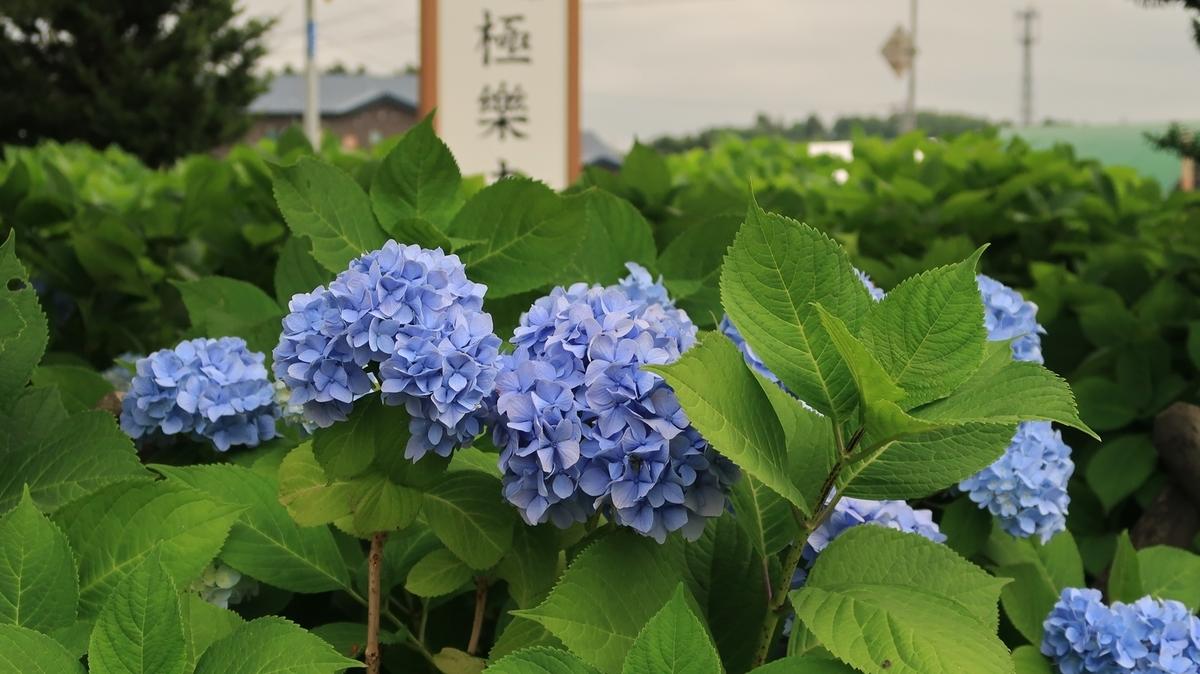 f:id:shirokumapanda:20210114232326j:plain