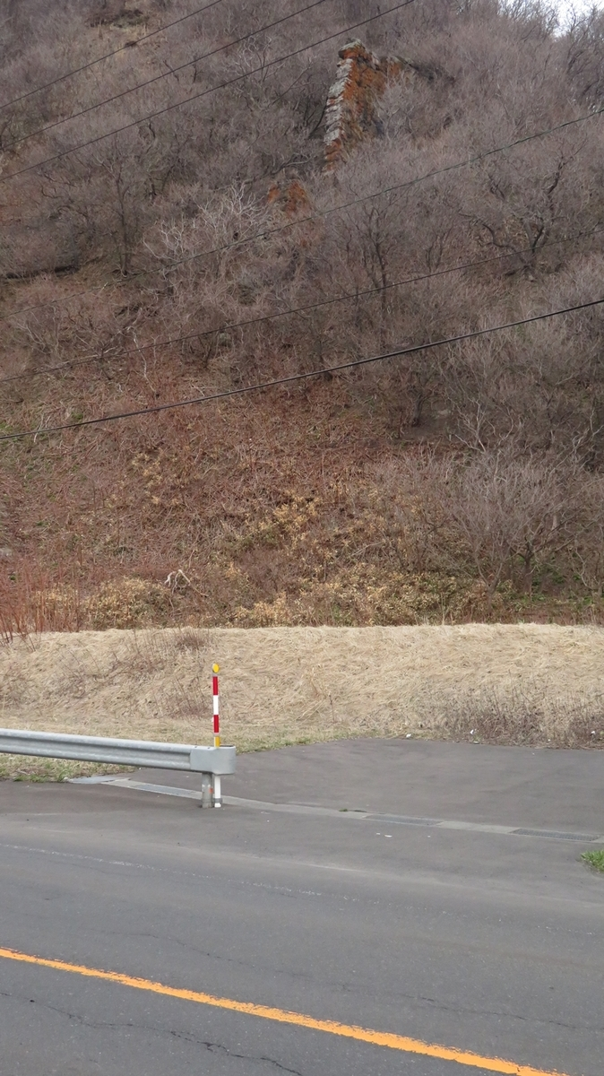 f:id:shirokumapanda:20210128014140j:plain