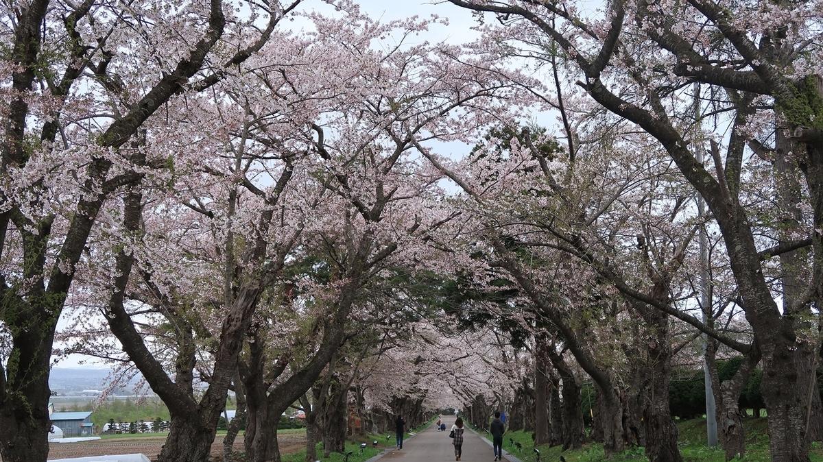 f:id:shirokumapanda:20210418235241j:plain
