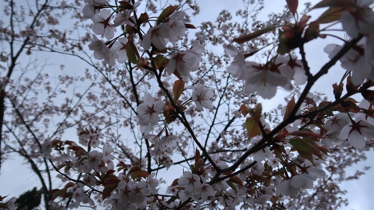 f:id:shirokumapanda:20210418235254j:plain